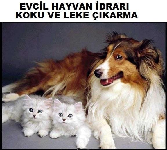 İzmir koltuk temizleme
